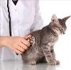 Ветеринарные клиники в Клетне